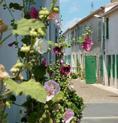 Ile de Ré, my favourite place to be Beautiful Paris, Beautiful Streets, Belle France, Ill Fly Away, Great Days Out, Visit France, Hollyhock, Travel Goals, France Travel
