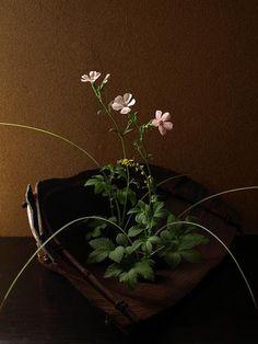 桃色節黒仙翁、金水引、糸芒の葉/飛騨地方で使われた箕