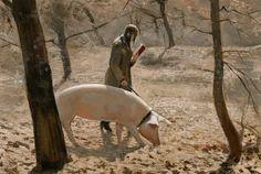 Woman reading while walking pig - Jan de Maesschalck. Spanish Artists, Dutch Artists, French Artists, Art Deco Artists, Pig Art, Art Academy, Italian Artist, Book Images, Art Model