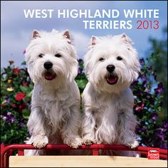 West Highland White Terriers Wall Calendar: Like many other terriers, the West Highland White Terrier originates from Scotland. Westies have a happy disposition which endears them to everyone they meet. Westies are very affectionate and known for their spirited nature.  $14.99  http://calendars.com/West-Highland-Terriers/West-Highland-White-Terriers-2013-Wall-Calendar/prod201300004878/?categoryId=cat10121=cat10121#