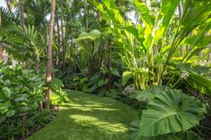 Tall palm trees surround this lush tropical backyard garden. A swimming pool and multiple seating areas framed by beautiful landscaping and hardscaping complete this home's personal oasis.