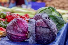 Purple cabbage is a versatile vegetable that tastes similar to green cabbage but is richer in beneficial plant compounds. Here are 8 impressive benefits of purple cabbage. Cabbage Benefits, Cabbage Wraps, Vegan Protein Sources, Purple Food, Purple Cabbage, Nutrient Rich Foods, Best Protein, Eating Raw, Veggies