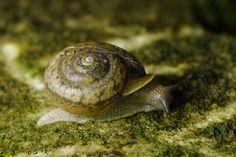 Cindy Bowers Snail tail, via Flickr. -- 2010 Innsbrook Photo Contest, Innsbrook Resort, Missouri MO