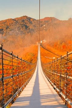 Orange Aesthetic, City Aesthetic, Scenery Pictures, Fall Pictures, Time Activities, Aesthetic Photography Nature, Nature Photography, Healthy Fats, Healthy Choices