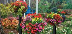 Beautify your home with an easy homemade container garden. #ContainerGarden #DIYGardenIdea
