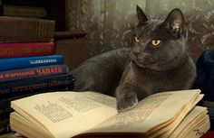 Community Post: 19 Cats Reading Books
