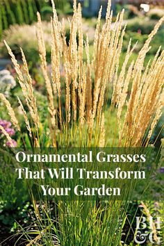 23 Varieties of Ornamental Grasses We're Obsessed With Does your landscape need an upgrade? Give your garden four seasons of interest with low-maintenance ornamental grasses such as Feather Reed Grass, Fountain Grass, Little Bluestem, and more! Home Landscaping, Front Yard Landscaping, Landscaping With Grasses, Inexpensive Landscaping, Feather Reed Grass, Fountain Grass, Low Maintenance Landscaping, Low Maintenance Garden, Garden Plants