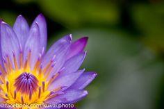 Beautiful Hawaiian flower.