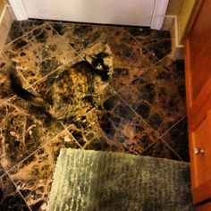 Smart Cat always knows how to camouflage! 16 funny and hilarious pictures of camouflaged kitties! Look more gifs, videos & pictures of cute cats on site! I Love Cats, Crazy Cats, Cute Cats, Animal Memes, Funny Animals, Cute Animals, Funny Cute, The Funny, That's Hilarious