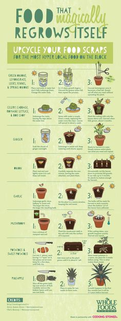Food the REGROWS ITSELF How to eat #organic on a Budget. Be sure to upcycle your food scraps... All of this food will magically regrow itself!