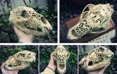 Bear's skull /carving - FIN/ by quidames.deviantart.com on @deviantART