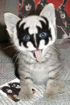 kiss kitty - wow! (normally, I don't condone 'coloring' animals, but I'm still a KISS fan & this was cute - photoshopped or not...)