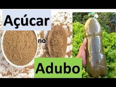 Coloque açúcar no adubo e se surpreenda ! solução de microorganismo - YouTube Growing Vegetables, Seeds, Plants, 1, Youtube, Gardening, Organic Fertilizer, Vertical Vegetable Gardens, Flower Gardening