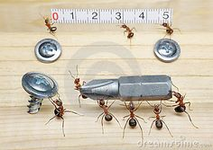 IMAGEN-5 Team of ants works constructing, teamwork