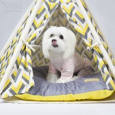 When you go camping, the best thing is waiting for food to be delivered from your parents!! #teepee #maltese #unitedpups #baileybee #dogbed #doghouse #cozy #yellowteepee #tipi #puppyteepee #dogteepee