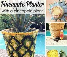How to Plant a Pineapple + a Pineapple Pot DIY