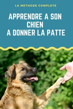 Découvrez comment apprendre à son chien à donner la patte en quelques minutes ! Cliquez pour lire le guide complet ! Education Canine, Positive Reinforcement, Confidence Building, Cavalier King Charles, Dog Training Tips, Border Collie, Yorkshire, Dogs And Puppies, Terrier