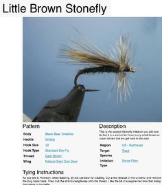 Little Brown Stonefly