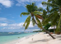 Beach Scene with Palm Trees - Where are you taking your next break from work? Find top dels at bizofferz.com #vacation #deals