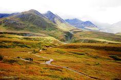 http://www.bing.com/images/search?q=Denali National Park
