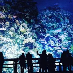 Ever wondered what it really looks like 35m deep at the bottom of the ocean? Well now you can find out! The Great Barrier Reef exhibition at the Leipzig Panometer by artist Yadegar Asisi presents an impressive 360 panorama of the unique and stunning underwater world of Australias Great Barrier Reef.  Displayed in a former Gas station the mural spans about 3500 square metres and is 32 metres high transporting its visitors on a visual discovery of the the Great Barrier Reefs beautiful corals…