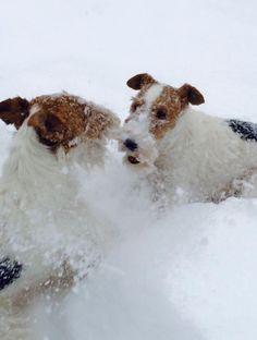 (◔◡◔) Snow happy!