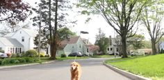 Too Tired to Walk the Dog? Use a Drone. | Snaglur