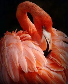 beautiful flamingo!