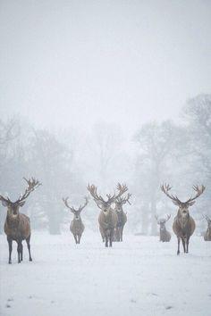 #зима #снег #олени #животные #красиво