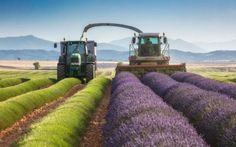 Lavender fields of Provence in Dorchester, England. (Guy Edwardes / Cover Images) http://pow.photos/2017/international-pow-18-24-july/