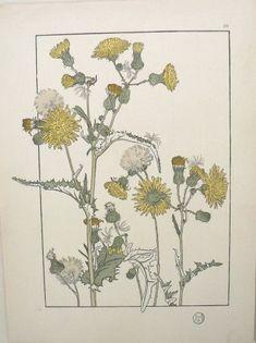 Another fabulous Art Deco / Art Nouveau botanical for $115. Fine Antique Prints: botanicals, birds, animals, views, maps, ...