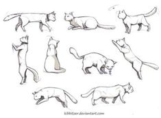 references-cats60