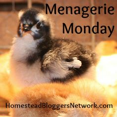 Menagerie Monday Linkup