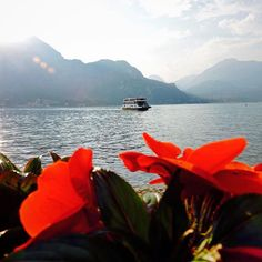 to warmer days on Lake Como, Italy 🇮🇹 ❤️ Como Italy, Lake Como, Tree Toppers, Travel Photos, Explore, Photo And Video, Day, Building, Instagram Posts