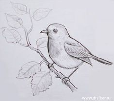 A white birch and a sparrow Art Drawings For Kids, Art Drawings Sketches Simple, Animal Sketches, Bird Drawings, Animal Drawings, Easy Drawings, Pencil Sketches Of Flowers, Landscape Pencil Drawings, Pencil Art Drawings