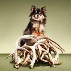 DIY Project: Train a Dog to Hunt Sheds | Outdoor Life