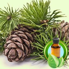 Cedarwood Virginiana Essential Oil is available at Natures Garden. This pure cedar oil is perfect for making natural soaps and natural cosmetics.