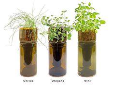 Wine Bottle Herb garden