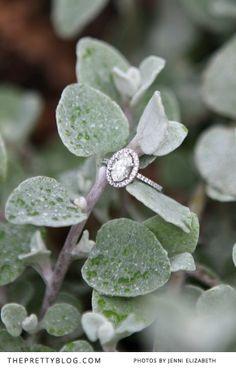 Gorgeous diamond engagement ring | Photography: Jenni Elizabeth | Ring: Charles Greig
