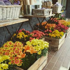 """Our flower store Downtown Oakville -  """"I'm so glad I live in a world where there are Octobers"""" L.M. Montgomery, Anne of Green Gables"""