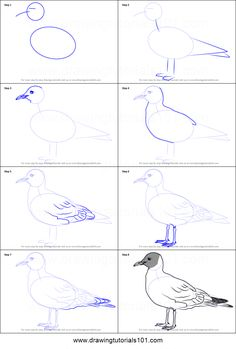 How to Draw a Black-Headed Gull Printable Drawing Sheet by DrawingTutorials101.com
