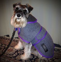 Grey with purple trim Schnauzers, Dog Coats, Dog Accessories, Riding Helmets, Cozy, Purple, Gallery, Animals, Outfits