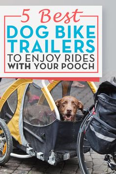 2016Best Dog Trailers for Bike and Bicycles: Top 5 List