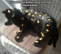 21 Funny Animal Pictures Of The Day