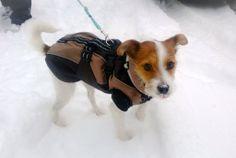 Meggie the snow dog