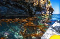 Prisoners Vs. Scorpion - Santa Barbara Adventure Co. Santa Cruz Island, Channel Islands National Park, Kelp Forest, California Destinations, Kayak Tours, Sea Birds, Under Construction, Scorpion, Marine Life