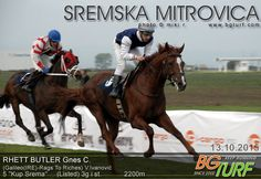 Rhett Butler, son of Rags to Riches, winning listed Kup Srema (Serbia) in October.