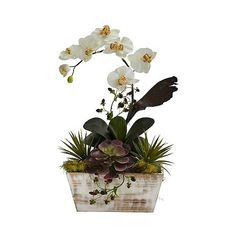 Nearly Natural Orchid and Succulent Garden with White Wash Planter... (£51) ❤ liked on Polyvore featuring home, outdoors, outdoor decor, white, outdoor garden decor, orchid planter, white planter, garden decor and garden planters