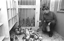 Image result for racing pigeons Racing Pigeons, Image