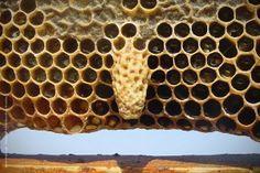 Φυσική κυψέλη μέλισσας